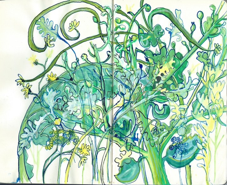 Sketch of seaplants by Myfanwy Tristram