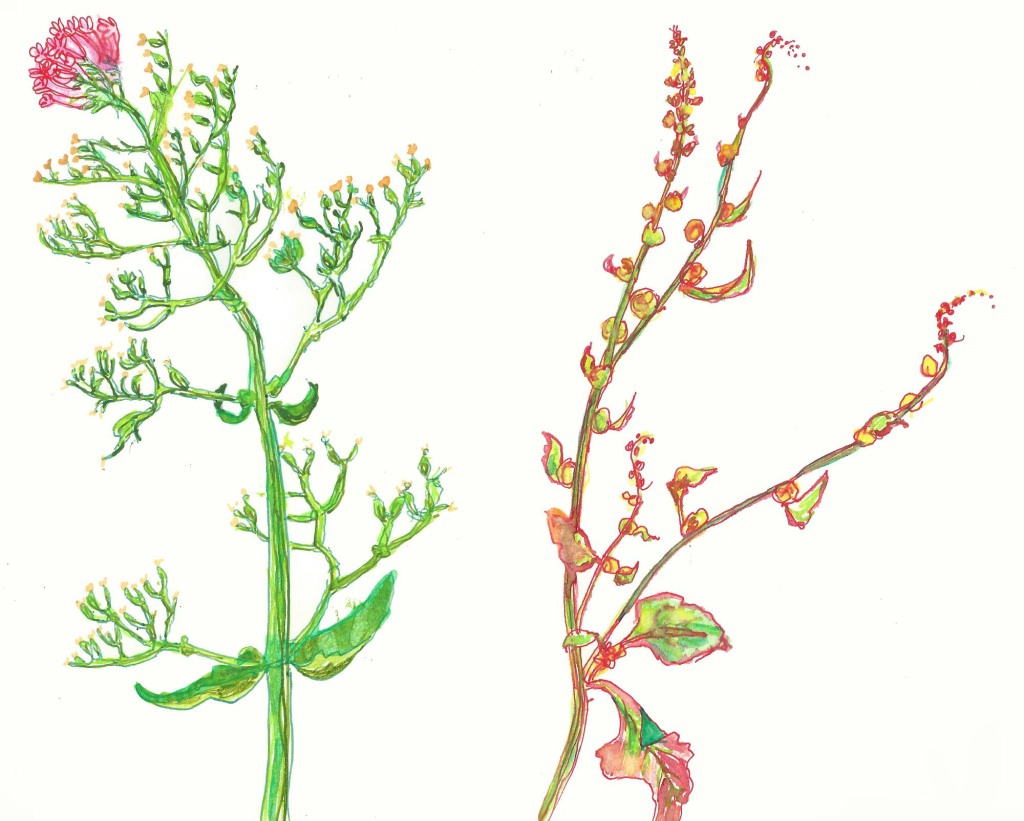 seaplants4sfw