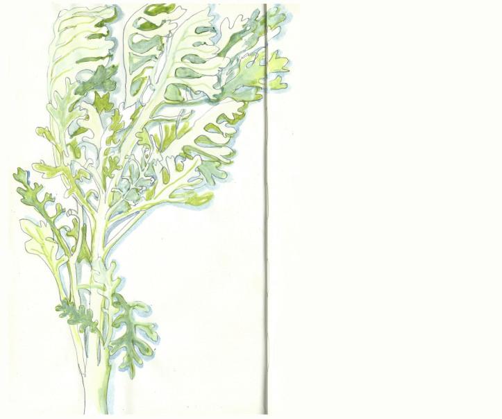 seaplants6sfw