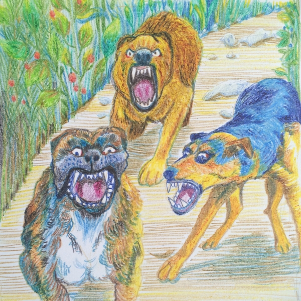wild dogs drawn in pencil crayon by Myfanwy Tristram - photo