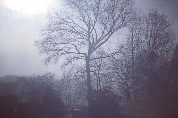 Misty trees by Myfanwy Tristram